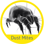 Dust Mite Treatment